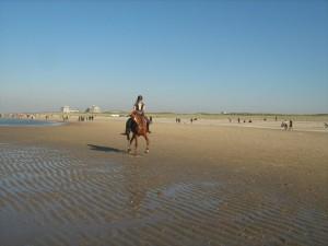 Mijn paard dat ik al 11 jaar heb